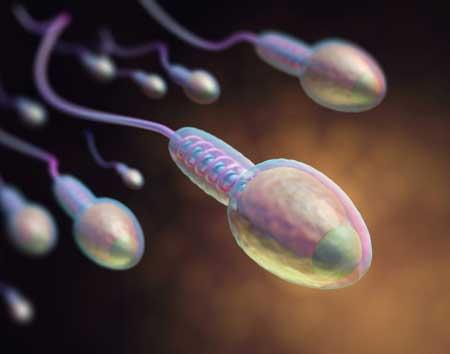 Trtamientos con donación de óvulos y espermatozoides