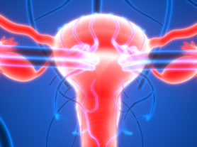 3D Illustration of Female Reproductive System with nervous system and urinary bladder