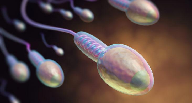 Problemas de fertilidad: Calidad del semen podría determinarse por la cola del espermatozoide